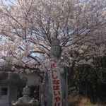 2018年 今年の桜も綺麗です
