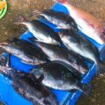 イカ釣り 2