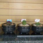 観葉植物を植えてみました
